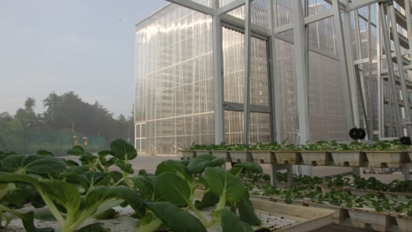 A new technology using AI is saving 50% of energy in Hydroponics Vertical Farms.