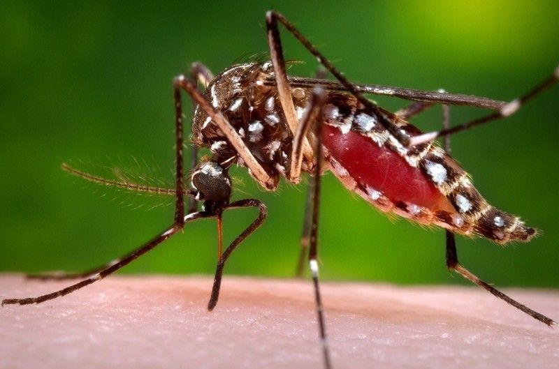 In Between the Plastic Contaminated Waters and Land, Mosquitos are becoming couriers.